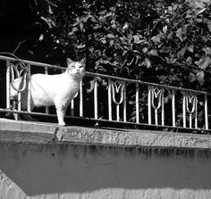 #cat on a wall #animals #nature