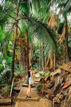 Reisetipps Seychellen: Der Naturpark Praslin lohnt sich bei einer Reise auf die Inseln der Seychellen. Mehr Reiseinfos und Tipps findet ihr auf dem Reiseblog Lilies Diary.