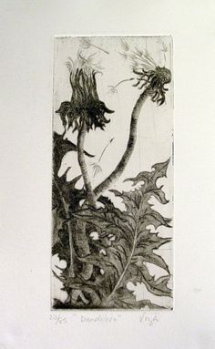 Artist: Viza Arlington Title: Dandelion etching Drypoint Image size 2 x 6 inches edition 85 signed and numbered original print art - printmaking - intaglio - nature - flowers- dandelion Linocut Prints, Art Prints, Block Prints, Intaglio Printmaking, Drypoint Etching, Art Sites, Botanical Drawings, Wood Engraving, Painting & Drawing