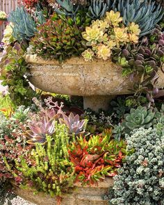"Debra Lee Baldwin (@debralbaldwin) on Instagram: ""Fountain by @margeeirene, an outtake from my book, Succulent Container Gardens. #succulentdesigner…"" #containergardeningideassucculents"