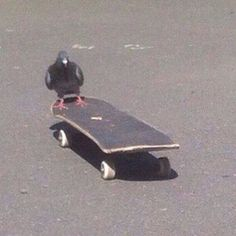"""""""I think I'll shit on this skateboard. Funny Animals, Cute Animals, Retro, Skater Girls, Thrasher, Mood Pics, Skateboards, Reaction Pictures, Picture Wall"""