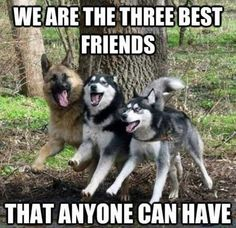 We are the three best friends that anyone can have...