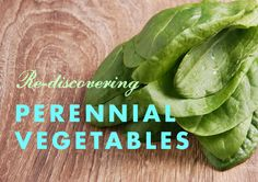 Rediscovering Perennial Vegetables   Inhabitat - Sustainable Design Innovation, Eco Architecture, Green Building