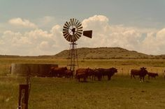 Discover the photography 136190339 by Debbie Adams – Explore millions of royalty-free pictures from outstanding photographers with EyeEm Animal Themes, Livestock, Windmill, Cattle, Farm Animals, Agriculture, Wind Turbine, Grass, Scene
