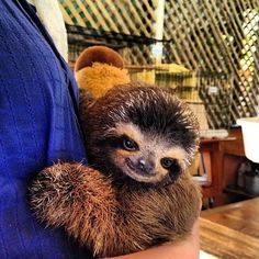 I want do to most of these things. I've already done a few. This is what I want to do the most. Hug a Sloth in Costa Rica. And then Bora Bora. But sloth first