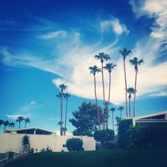 Wispy clouds and palm trees at Canyon View Estates in Palm Springs.. #palmsprings #clouds #canyonviewestates