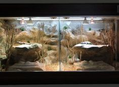 Bearded Dragon Enclosure, Bearded Dragon Cage, Vivarium, Dragons, Terrariums, Reptiles, Terrarium, Kites