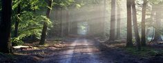 Embracing the Path- the Way to True Freedom