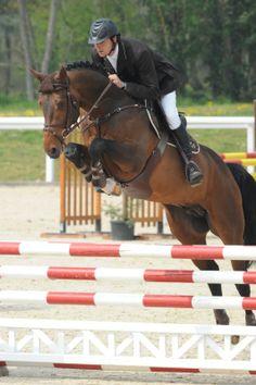 Brown bay horse jumping - warmblood stallion - Vivaldi du Seigneur - Les Garennes