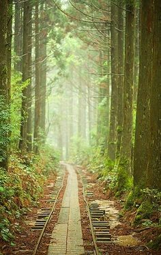 Train Track  Pathway through as misty green forest