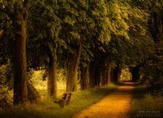 I love paths