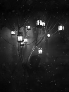 They grew in the tree. Each lantern had a stem in it with a light burning around it, never consumed but always flickering with life.