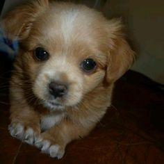 Such a cutie puppy!!!