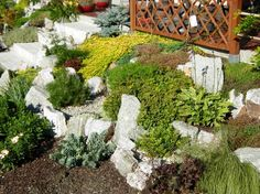Steingarten terrassiert anlegen und bepflanzen - Bodendecker