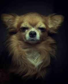 Dramatic Portraits Of Animals Expression Like Human Emotions photography Dog Photography in Animal Photography Collections Animals Beautiful, Cute Animals, Animals Dog, Animal Projects, Animal Faces, Dog Portraits, Dog Art, Mans Best Friend, Animal Photography