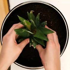Garden Seeds, Garden Plants, Indoor Plants, Regrow Vegetables, Growing Vegetables, Easy Plants To Grow, Growing Plants, Plantas Bonsai, Vegetable Garden Design