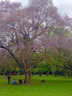 Jardín botánico.Asunción-Paraguay