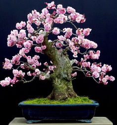 Just pink flower bonsai