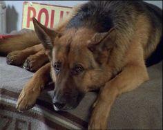 police dog:Rex