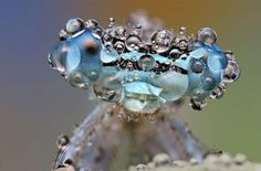covered in dew