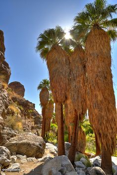 Andreas Canyon - Palm Springs, CALIFORNIA via flickr