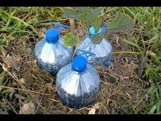 Sistema de gotejamento solar com garrafas pet