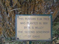 Tree planted by 2nd governor of Idaho, Crane House Museum, Harrison ID