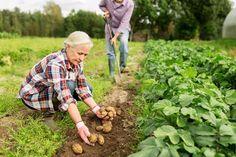 Planter Boxes, Planters, Planting Potatoes, Flower Vases, Flowers, Pallets Garden, Agriculture, Farming, Climbing Roses