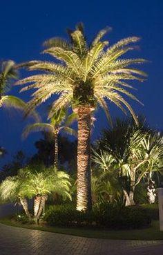 Tree Lighting, Outdoor Lighting, Yard Lighting, Exterior Lighting,  Landscape Lighting, Christmas Lights, Lighting Design, Palm Trees, Green  Garden