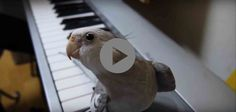 We've Heard #Birds Sing, But Listen To This One's Improvised Solo