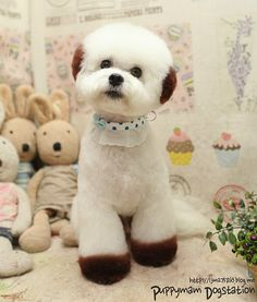 From Korean pet studio, Puppymam Dogstation. Dog Grooming Styles, Poodle Grooming, Pet Grooming, Asian Dogs, Dog Dye, Bichon Dog, Creative Grooming, Dog Haircuts, Cute Dog Photos