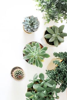 Künstliche Agave 13-Blatt Sukkulenten Fake Floral Plastic Plant Home