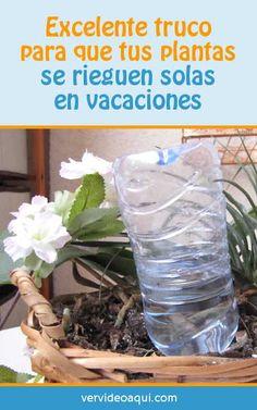 Excelente truco para que tus plantas se rieguen solas en vacaciones  #plantes #flores #interior #DIY #regar #vacaciones