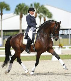 Yvonne Barteau of KYB Dressage riding the Holsteiner Stallion Raymeister, owned by Ginna Frantz of Grand Prix Equestrian in Maple Park, IL. This is the sire of my daughter's new four year old American Warmblood horse. Warmblood Horses, Dressage Horses, Andalusian Horse, Friesian Horse, Draft Horses, Arabian Horses, English Riding, Equestrian Outfits, Horse Pictures