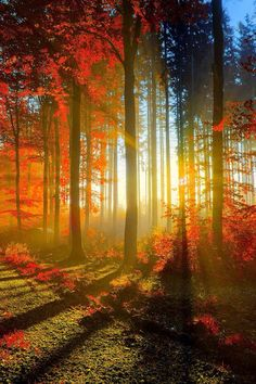 Autumn forest sunlight.