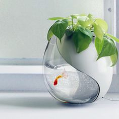 A great space saving solution! This awesome piece is a fish tank merged with a potted plant.
