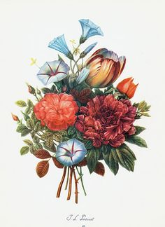 Peony, Rose, Tulip, Morning Glory Prevost 18th century  Botanical Prints + Natural History Prints from StudioBotanika