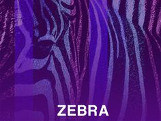 Zebra by Edward Houstman