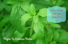 Is stevia safe? Is stevia healthy? These are questions many are asking since stevia is an alternative to processed sugar & artificial sweeteners. Herbal Remedies, Health Remedies, Natural Remedies, Natural Treatments, Growing Stevia, Candida Diet Recipes, Candida Cleanse, Liver Cleanse, Liver Detox