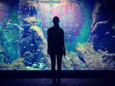 Akwarium #wroclaw #wrocław #zoowroclaw #afrykarium #aquarium #fish #mrwroclover #shotoniphone #wildlife #wildlifephotographer #akwarium