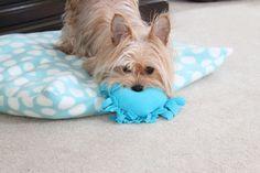simple DIY tied fleece heart dog toy