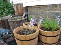 DIY Plant watering globes (aka wine bottles)