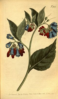 Favourite flowers of garden and greenhouse v.3 London and New York :Frederick Warne & co.,1896-97.