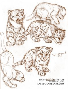 Sketches of Snow Leopard cubs.