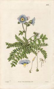 Curtis Botanicals