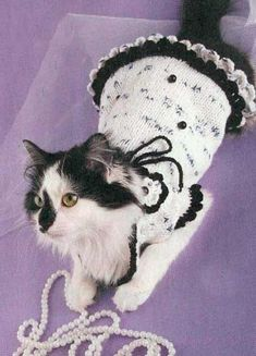 pets clothing, knitted hats and sweaters - aww! cute!