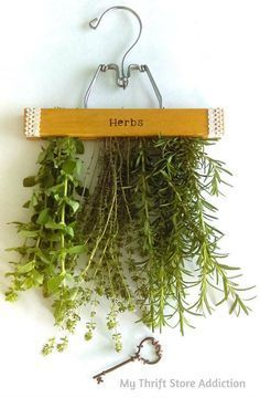What a smart idea for drying herbs!