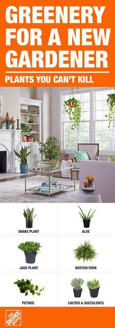 Bring the outside inside and add indoor houseplants throughout your home. These 6 indoor houseplants are easy to maintain and a starting point for new-to-gardening gardeners. They not only add dimension and style to your space, but also clean the air arou Container Plants, Container Gardening, Indoor Gardening, Fine Gardening, Balcony Gardening, Gardening Gloves, Garden Pots, Gardening Tips, Garden Cottage