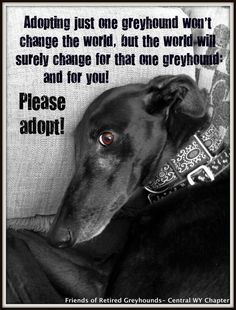 So true!! I have to mention that this houndie looks a heck of alot like my Vincent Price. I think he's been modeling in his spare time..