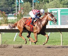 Seaneen Girl, with Paco Lopez riding, picks up her second graded victory by winning the Monmouth Oaks. Horse Racing, Race Horses, Sport Of Kings, Thoroughbred Horse, Racing News, Girl Running, North America, America 2, Iowa